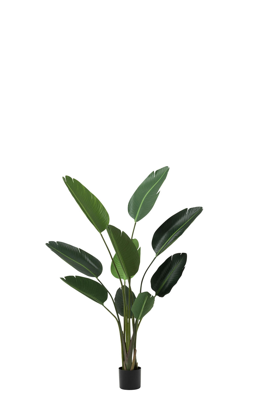 Strelitzia Plastik Grün Small